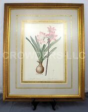 """Pierre-Joseph Redoute Amaryllis Belladonna Lily Matted Framed Color 34x28"""" Print"""