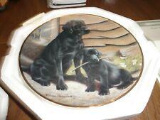 Like Father, Like Son by Nigel Hemming Labrador plate