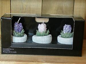 3er Set Lavendelkerzen im Topf, Motivkerzen im Steintopf