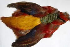 1x corp FAISAN DOREE  plume montage truite fliegen mosca Pheasant fasan body