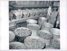 1969 Scene Inside Louisville Pecan Company Alabama Press Photo