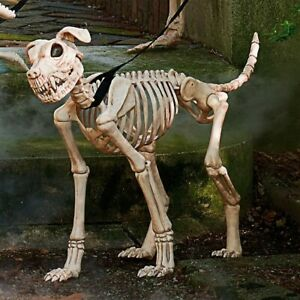 Shadow Skeleton Dog Halloween Prop Grandin Road Large with leash NIB New in Box