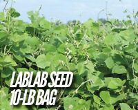 1-lb BUCKLUNCH FORAGE SUGAR BEETS Deer Food Plot Seed FAST FREE SHIPPING