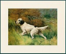 ENGLISH SETTER AT WORK LOVELY DOG PRINT MOUNTED READY TO FRAME