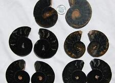 7951 LOT of FIVE/5 RARE 1in100 BLACK Ammonite PAIR Crystals FOSSIL Medium 5-7cm