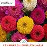 ZINNIA - Dahlia Flowering Mixture (300 Seeds) BULK Beds & Borders CUT FLOWERS