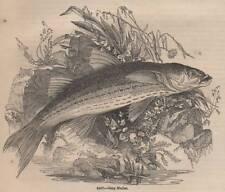 Antigüedad 1845 impresión Lisa pesca con mosca pesca con caña Fish Varilla Tackle Cesta De Río