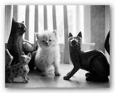 CAT ART PRINT Ragdoll Kitten Kim Levin