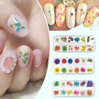 12 Colors Real Dry Dried Flower Leaves 3D UV Gel Acrylic Tips DIY Nail Art Decor