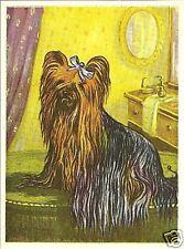 Rare 1952 Dog Art Print Austria Tobacco Company Bildwerk Card Yorkshire Terrier