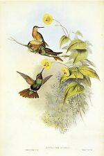 "1990 Vintage HUMMINGBIRD #249 ""BRAZILIAN RUBY"" GORGEOUS GOULD Art Lithograph"
