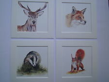 Watercolour Stag, badger, fox, squirrel  Prints (NEW BIGGER!) x 4, in mounts