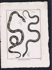 Le Mocqueur -La Bande-noire (Black Band) Panckoucke Snakes 1789 Herpetology