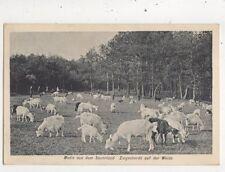 Motiv Aus Dem Sauerland Ziegenherde Auf Der Weide Germany 1917 Postcard 945a