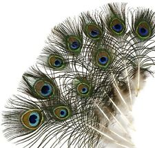 "25 Pcs MINI PEACOCK Natural EYE Feathers 4-10"" (Pads/Trim/Hat/Halloween/Costume)"