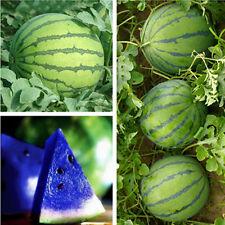 Sale! 10X Magical Blue Watermelon Seeds Vegetable Organic Home Garden Plants