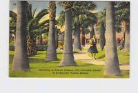 PPC POSTCARD ARIZONA TUCSON UNIVERSITY OF ARIZONA CAMPUS WITH UNIVERSITY LIBRARY