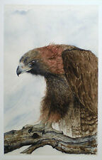 Aceo Art Trading Card  Wildlife Miniature Picture Bird Hawk Nature Watercolor