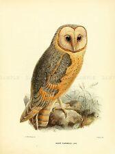 DRAWING BIRD ROWLEY KEULEMANS BARN OWL ART PRINT POSTER LAH341A