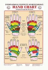HAND REFLEXOLOGY WALL CHART Dwight Byers