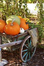 Fall Festival Soap / Candle Making Fragrance Oil 1-16 Ounce *Free Shipping*