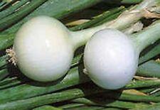 Vegetal Cebolla Kosma Aprox 500 Semillas Otoño/Primavera