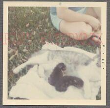 Vintage Color Snapshot Photo Mama Cat Nursing Cute Kittens 703437
