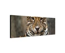 120x40cm Jaguar Gefahr Wildnis Dschungel Pelz Tier Keilrahmen Leinwand Sinus Art
