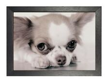 Chiwawa Puppy Poster Beautiful Little Puppy Sweet Cute Animal Photo Best Friend