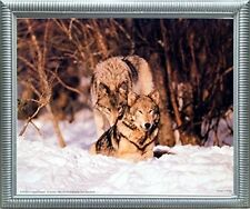 Wolf Pair in Snow Wildlife Animal Nature Wall Decor Silver Framed Picture 20x24
