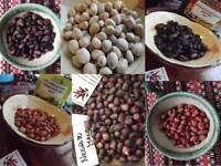 Erdnuss Paket aus 6 Sorten - Peanut Sortiment - 60+ Samen - FEINE RARITäT!