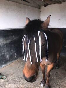 No Head Collar Zebra Fly Fringe Black & White Horse Pony