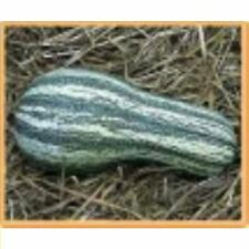 CUSHAW, GREEN STRIPE , 40  Heirloom, Non-gmo, gluten free Seeds FREE SHIPPING