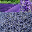 French LAVENDER Dried Lavender..