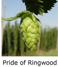 "1x HOPS 4"" pot * PRIDE OF RINGWOOD ( Home brewing perennial plant hop bine vine"