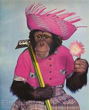 1959 Vintage MONKEY HUMOR Chimpanzee GARDENER Flower Straw Hat Animal Photo Art