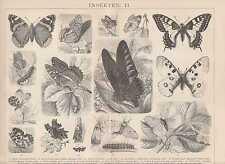Schmetterlinge Apollofalter Schwalbenschwanz HOLZSTICH von 1884 Admiral