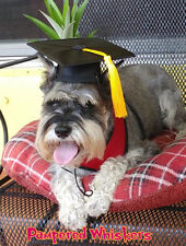 "Dog Graduation cap/hat for dogs with 13-15"" collar size"