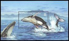 """ASCENSION 970 - Humpback Whale """"Megaptera novaeangliae"""" (pa62509)"""