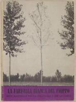 LA FARFALLA BIANCA DEL PIOPPO STILPNOTIA SALICIS 1959 AGRICOLTURA AGRICULTURE