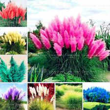 Genuine! 199 Pcs New Rare Purple Pampas Grass Ornamental Plant Flowers mix color