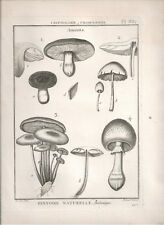 1791 Antique Botanical B/W print Amanita Lamarck's Tableau Methodique