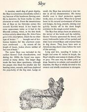 Skye Terrier 1950 Dog Breed Art And Breed Description Paul Brown