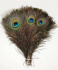 PEACOCK TAIL FEATHERS Real Natural Feathers 10-12 Inches In Height Top Quality!!
