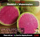 Radish Watermelon 30 Seeds Minimum Vegetable Garden Plant. Rare & Unusual.