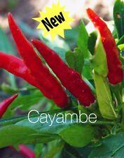 HOT CHILLI PEPPER - CAYAMBE 10 SEEDS