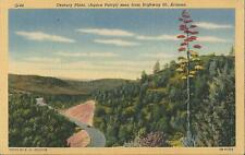 Postcard Arizona Century Plant Agave Parryi Hwy 60 between Globe & Showlow 1940s