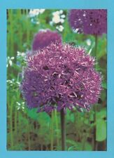 FLOWERS - GARDENERS' WORLD MAGAZINE POSTCARD SIZED CARD  - SUMMER BULBS    ( A )