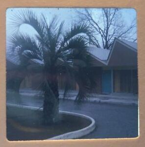 Vtg 1960s Ektachrome 35mm Color Slide Tropical Palm Tree Resort Mid Century Mod