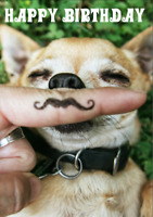 Cute & Funny Humour Birthday Greetings Card from Animal House: Chihuahua Tache